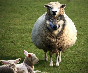 wolf-in-sheep-clothing